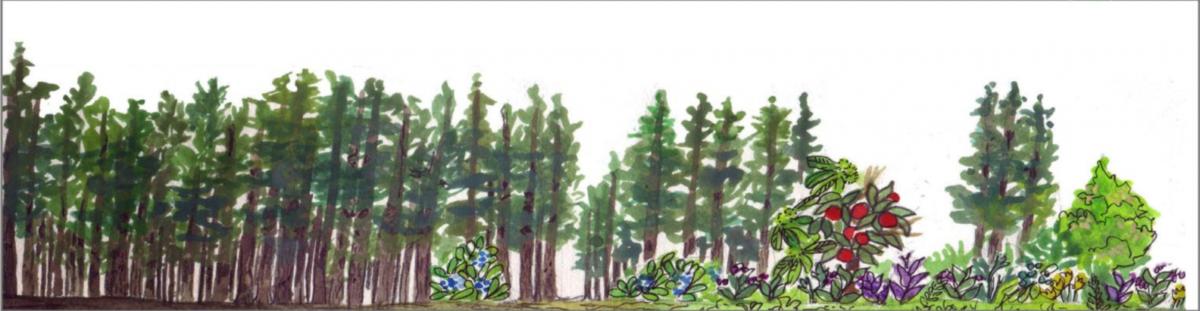 Handboek bosomvorming: van arm dennenbos naar rijk voedselbos