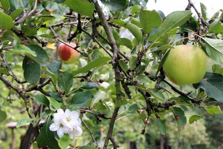 Droogtebestendige voedselbossen: Voedselbos In 't Holt
