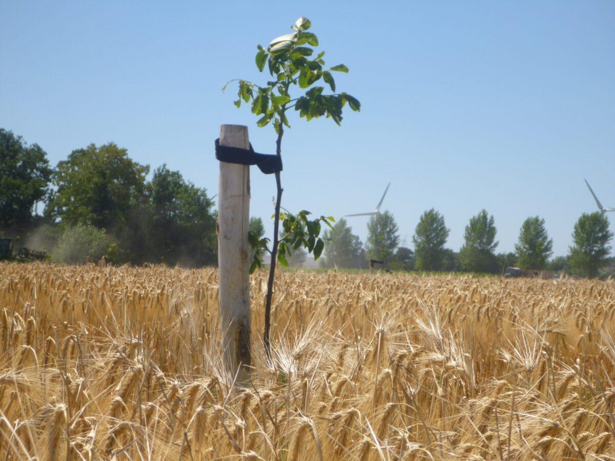 Rapport WUR: Bomen planten op landbouwgrond: wat mag ik?