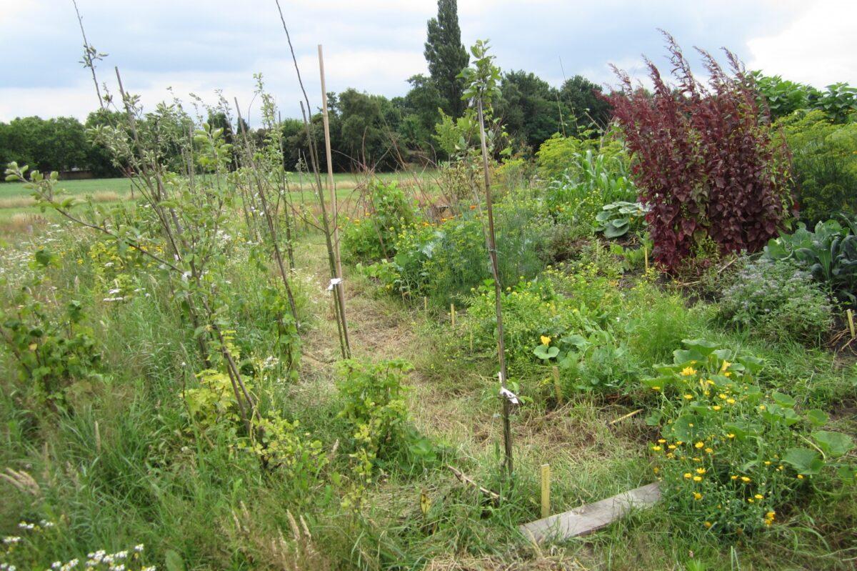 Permacultuur-kwekerij Op Goede Grond bestaat 15 jaar
