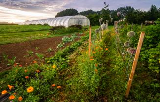 Stimuleren van agro-ecologische productie