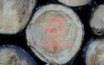 Energiebedrijven en milieuorganisaties sluiten akkoord biomassa