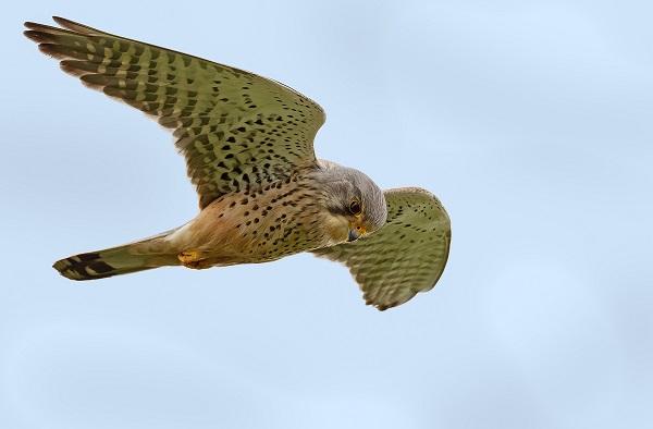 Teken de petitie tegen Wildlife Crime