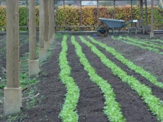 In beeld: biologische tuinderij en de voordelen voor de omgeving