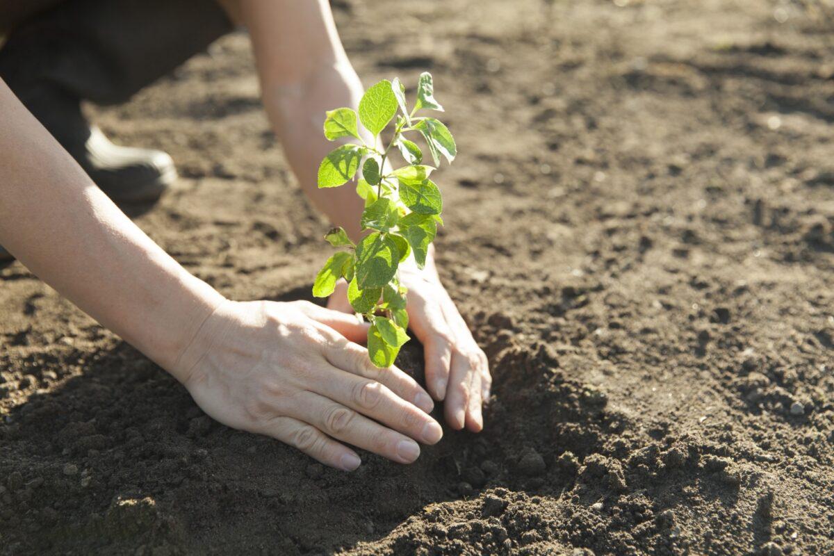 Najaarscursus | Aan de slag met voedselbossen