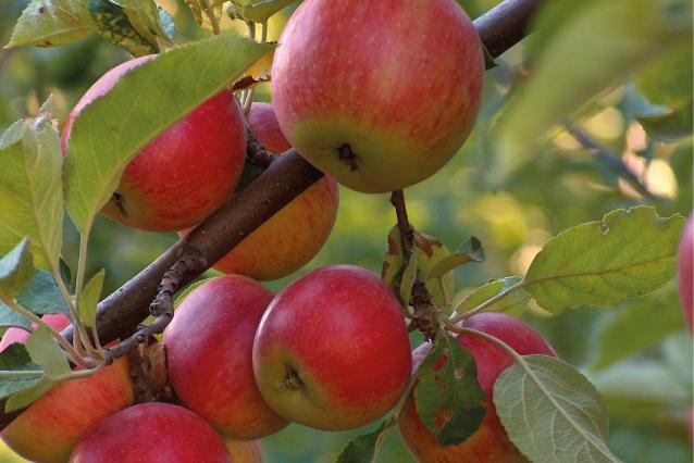 5 nieuwe voedselbossen in Brabant