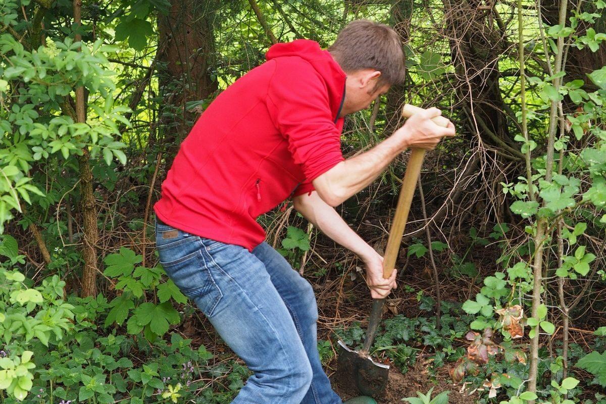 HAS-studenten starten meerjarig onderzoek voedselbossen