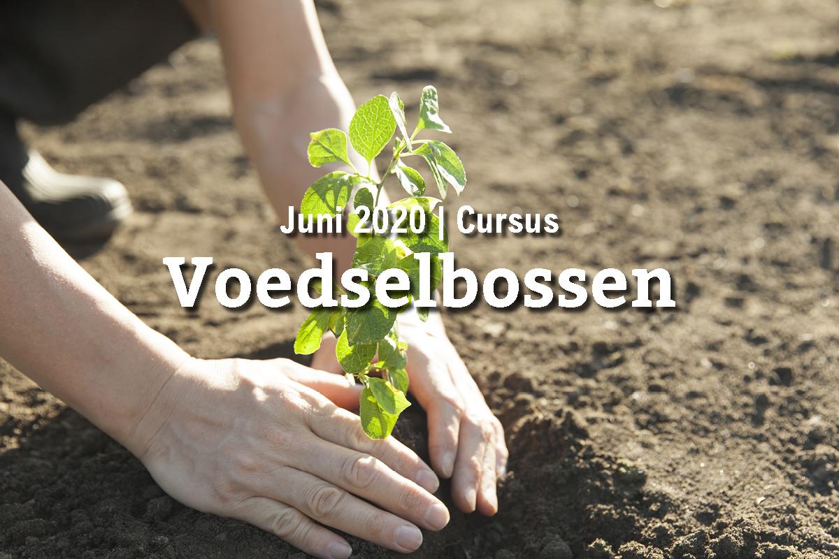 UITVERKOCHT: basiscursus voedselbossen (9 juni)