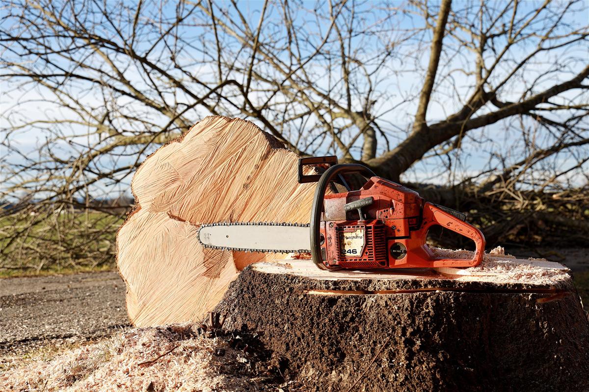 Kap geen waardevolle bomen langs provinciale wegen