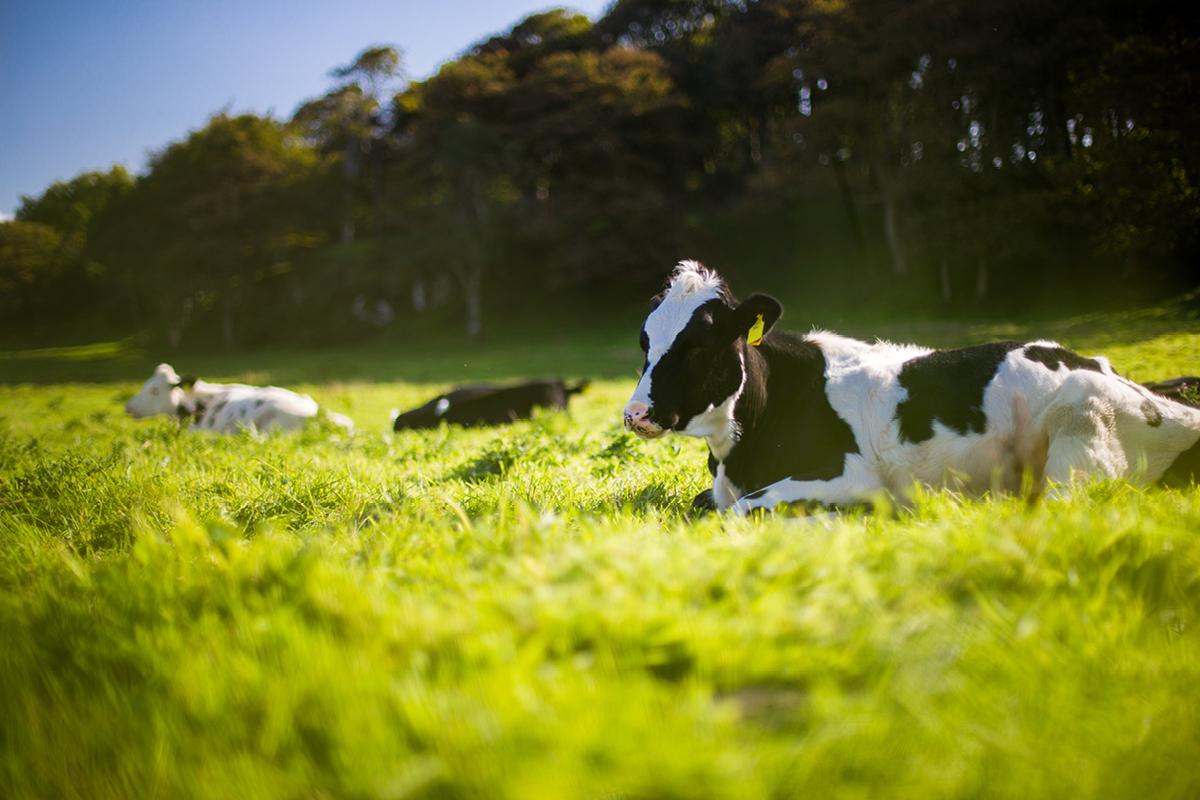 Kabinetsplannen: Eerste stap naar meer duurzame landbouw