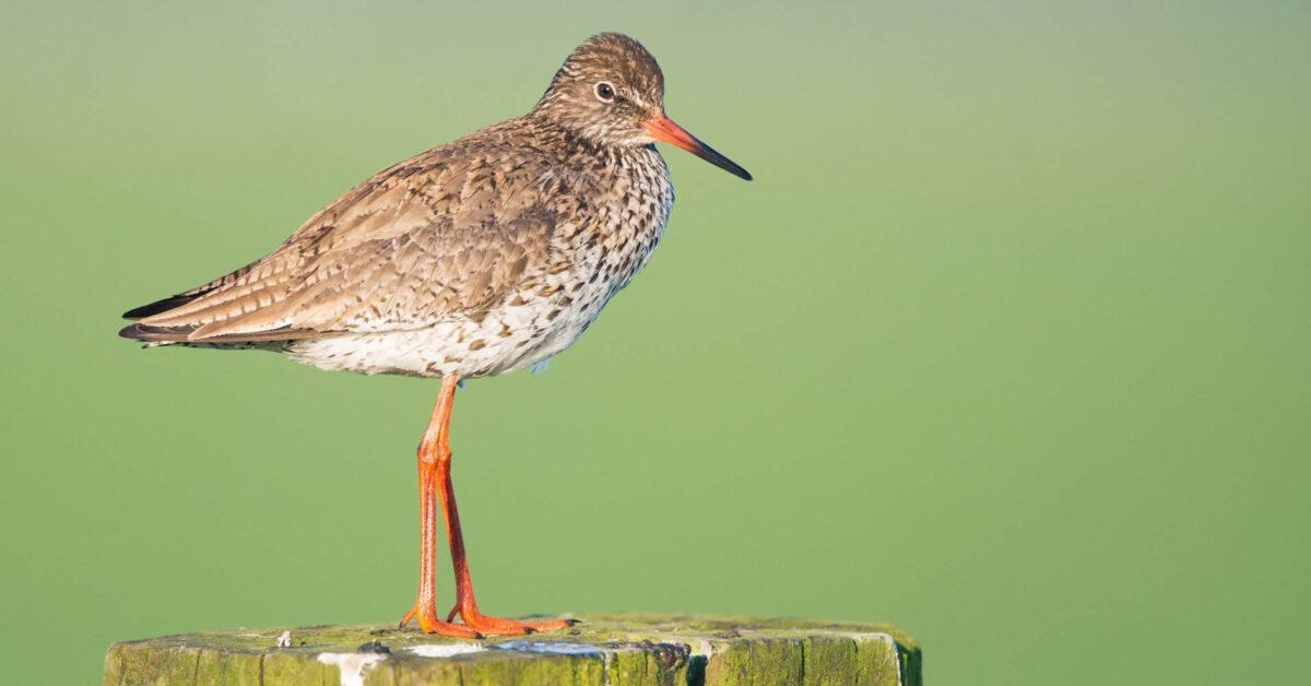 Provincies & natuurclubs: 'Meer inspanning nodig om natuur te beschermen'