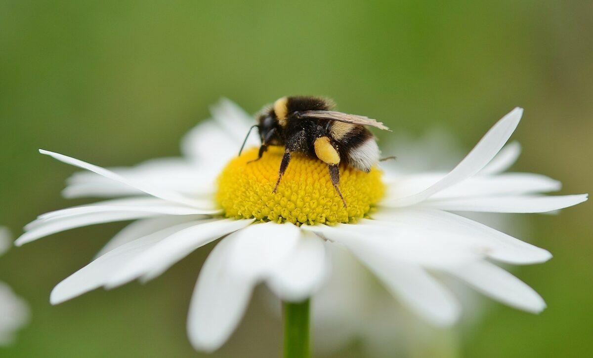 Doe mee met de Nationale Bijentelling 2020