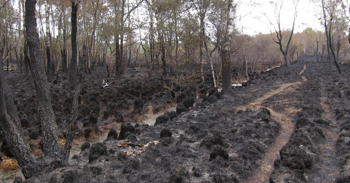 Vernatting nodig om natuurbranden in Deurnese Peel te voorkomen