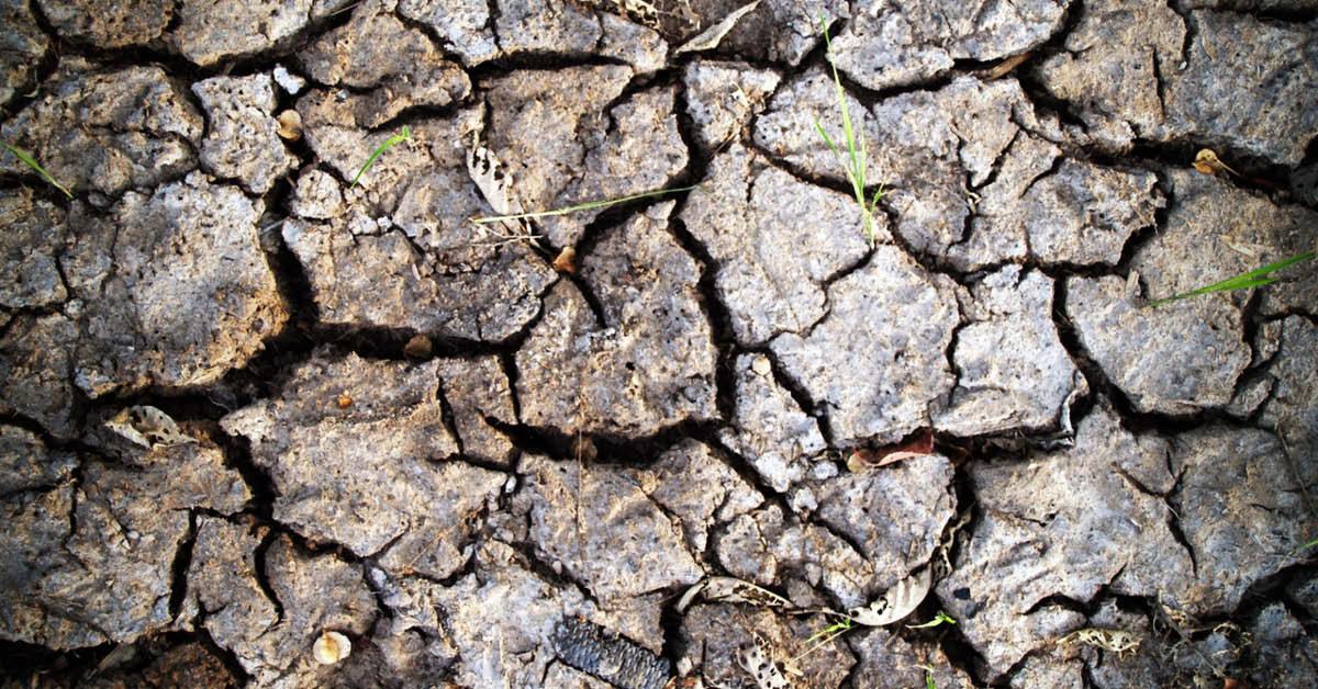 Brabantse natuurorganisaties bieden waterschappen oplossingen voor droogtecrisis