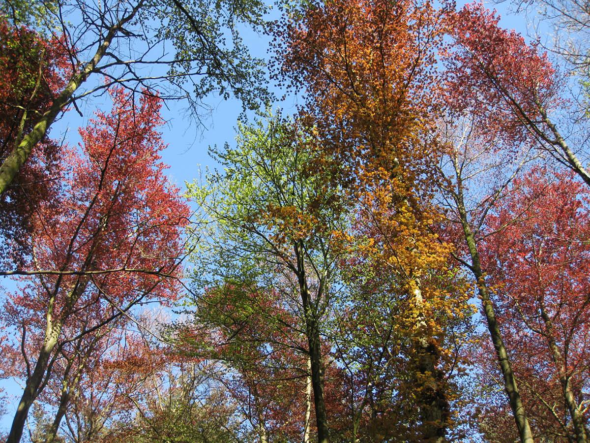 Natuurnetwerk Brabant & Natura 2000