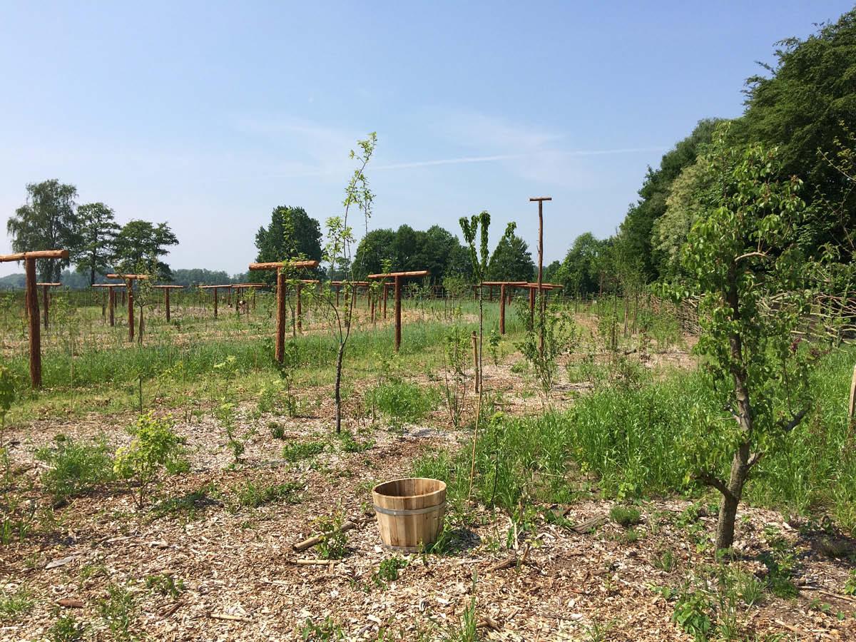 Vijf nieuwe locaties beschikbaar voor voedselbossen