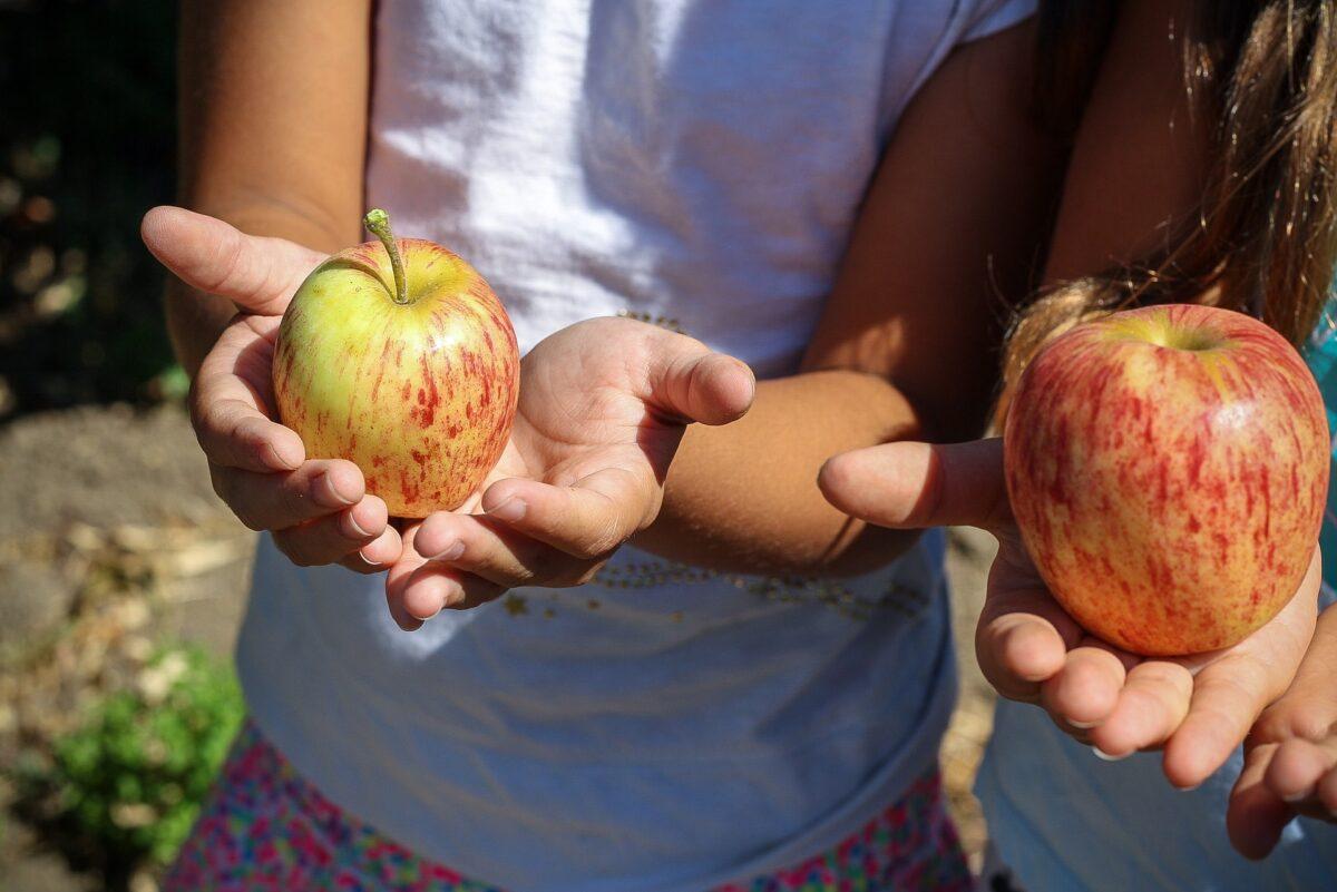 Manifest Gezonde Voeding aangeboden