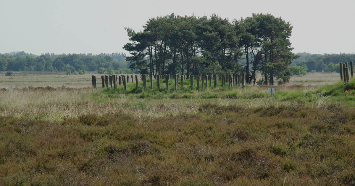 Grondwater | BMF en BL kritisch op uitbreiding grondwateronttrekking nabij Regte Heide