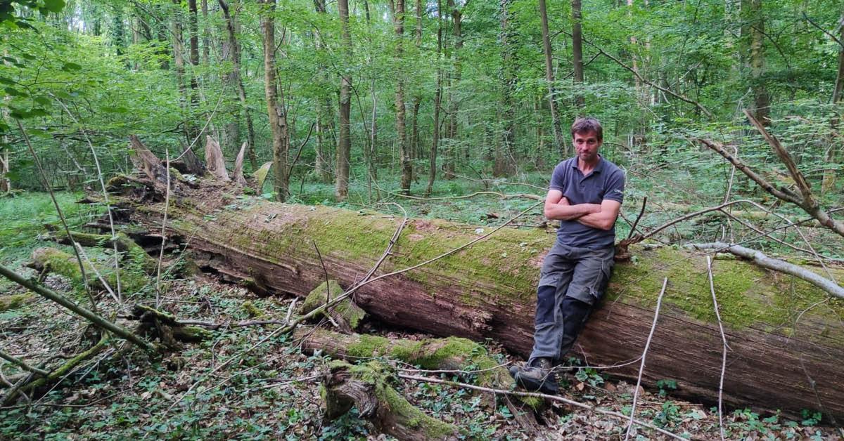 Voedselbos Meerbos: natuurbos met voedselbossoorten