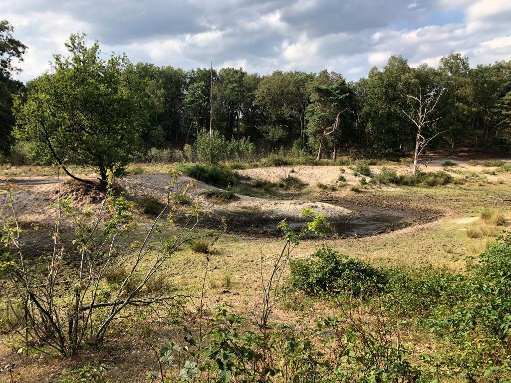 Verdroging: Natuurinclusieve Waterbeheerplannen noodzakelijk