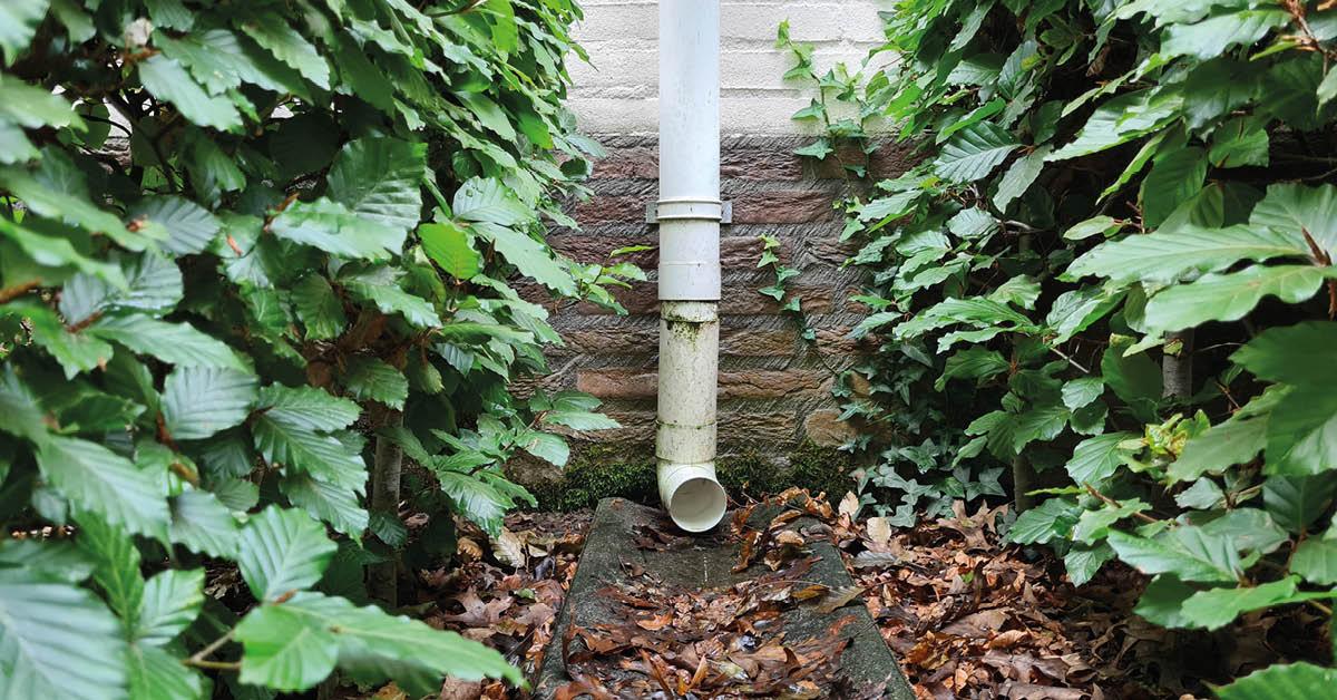 Klimaatadaptatie | 4 x Regenwater tijdelijk opvangen in je tuin