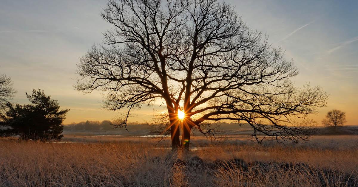 Natuurorganisaties verzoeken Provincie Noord-Brabant om komst megastal bij Kampina te voorkomen