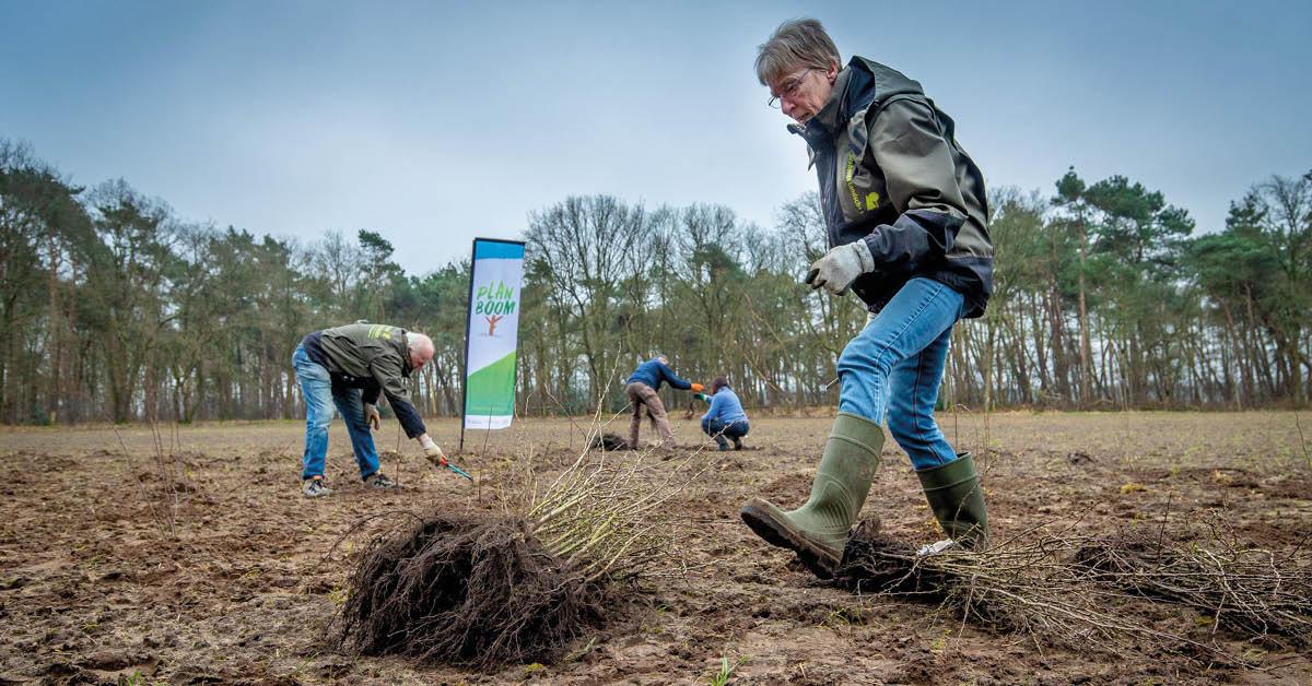 Groene vrijwilligers planten ruim 40 duizend bomen in Brabant