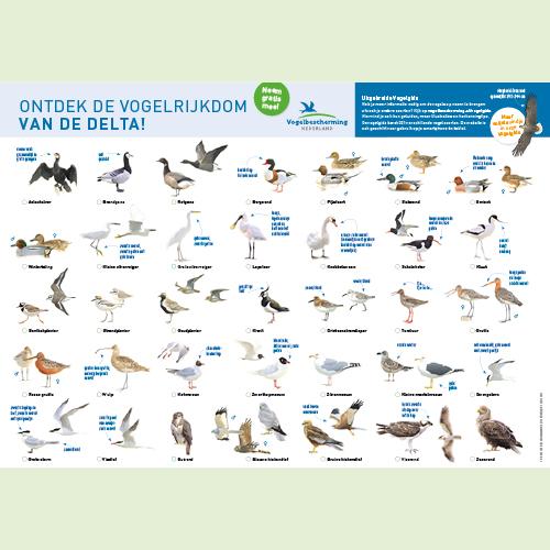 Gratis vogelkaart: ontdek de vogels van de Zuidwestelijke Delta!