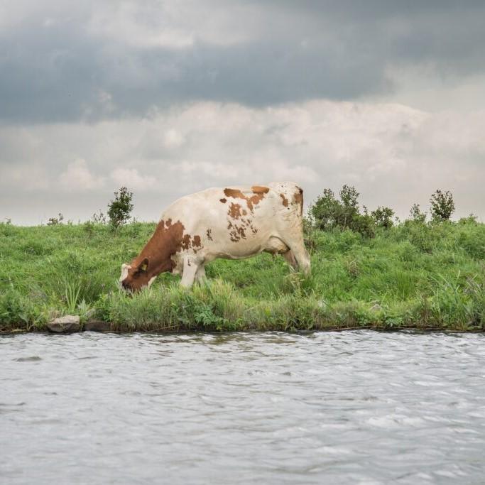 Natuur en Milieufederaties blij met voorstel voor gezamenlijke aanpak stikstof
