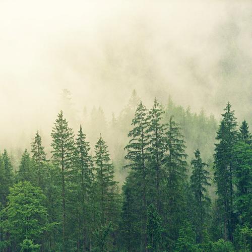 Natuur- en milieuorganisaties stappen uit Convenant Duurzaamheid Biomassa