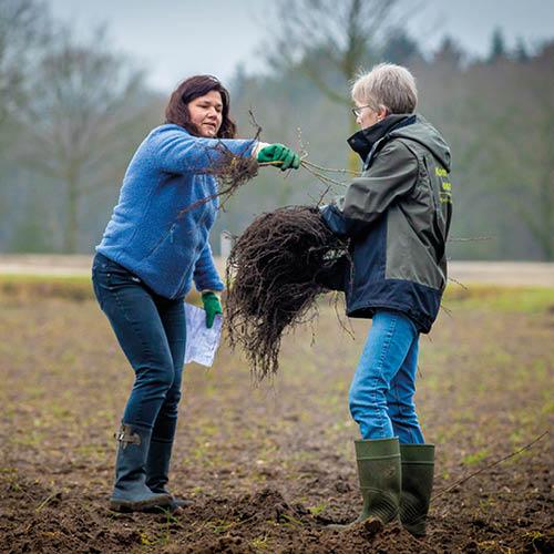 Brabantse natuurorganisaties delen 57 duizend gratis bomen uit