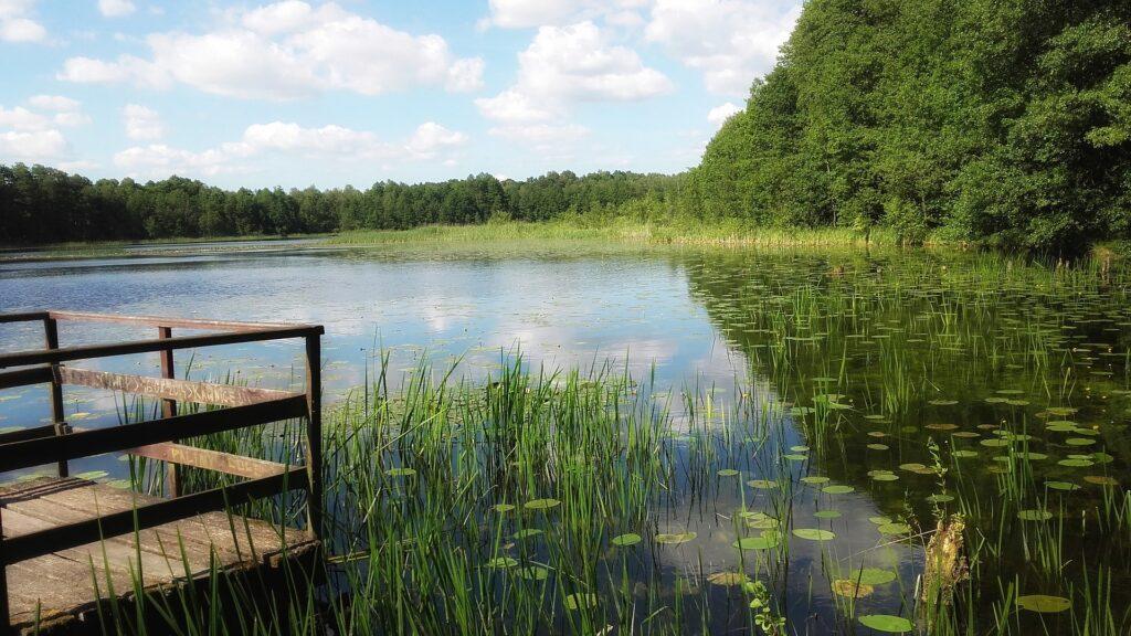 Natuurorganisaties: Schoner water kan alleen met strenger mestbeleid